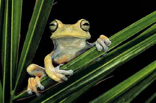 regard-grenouille-229674.jpg
