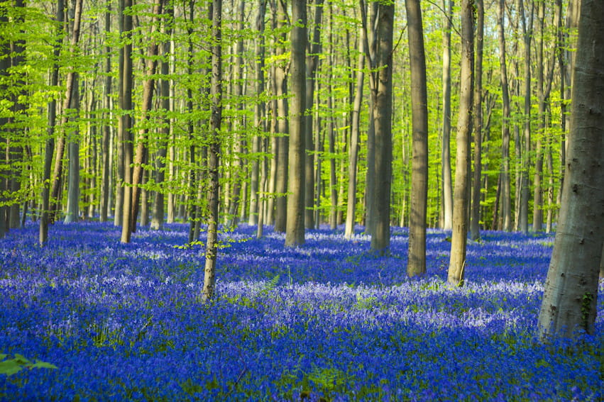 how to make blue paint the forest