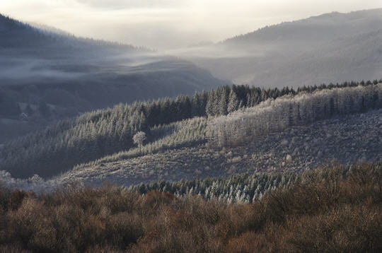 L'année de la forêt en Morvan  dans Traditions en Bourgogne foret-bibracte-236220