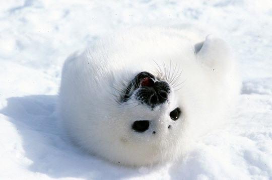 Jeux dans la neige - Jeux d animaux trop mignon ...