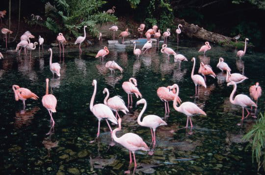 http://www.linternaute.com/voyage/amerique-du-nord/photo/republique-dominicaine/image/flamants-roses-243775.jpg