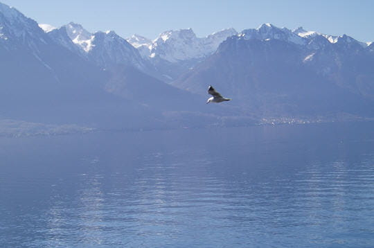 le lac leman suisse  france les  beaux lacs du monde linternaute