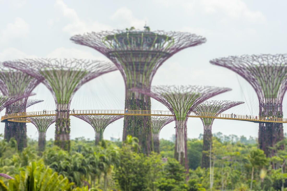 Les Jardins De La Baie De Singapour Ces Photos Ne Sont