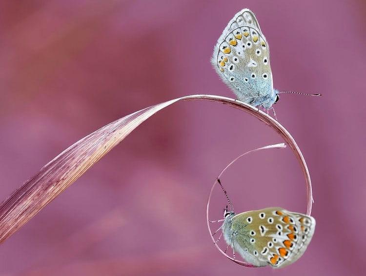 Effet de miroir 25 portraits originaux d 39 insectes for Photo effet miroir