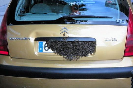 une plaque en nid d 39 abeilles les voitures insolites par les lecteurs novembre 2007 linternaute. Black Bedroom Furniture Sets. Home Design Ideas
