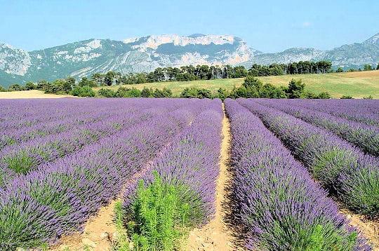 http://www.linternaute.com/nature-animaux/magazine/photo/les-100-paysages-de-france/image/provence-262748.jpg