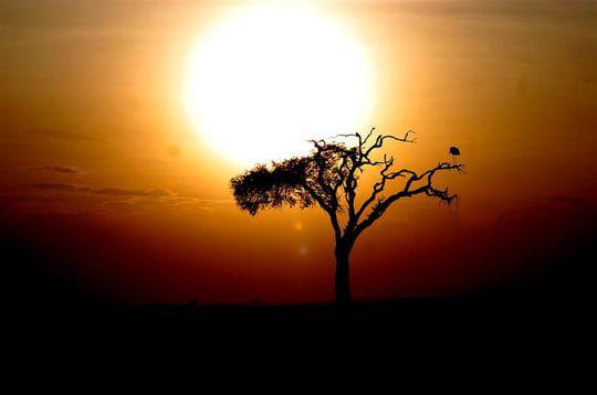 http://www.linternaute.com/cinema/magazine/photo/paysages-du-cinema-admirez-la-vue/image/out-of-africa-264004.jpg