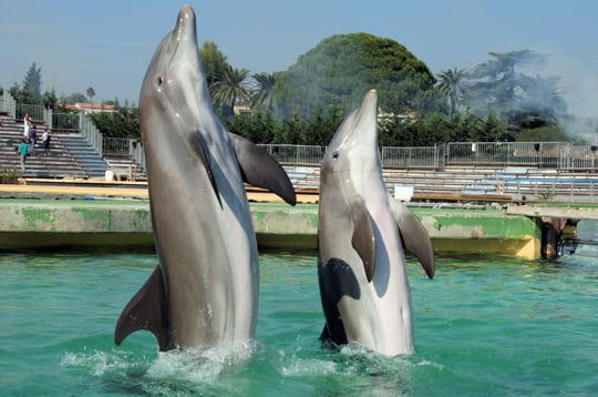 Rencontre avec les dauphins marineland avis