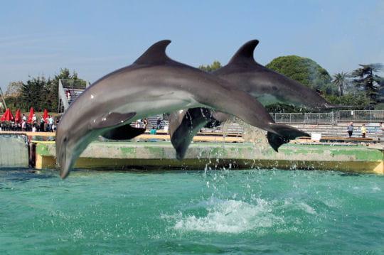 Marineland rencontre avec les dauphins anniversaire