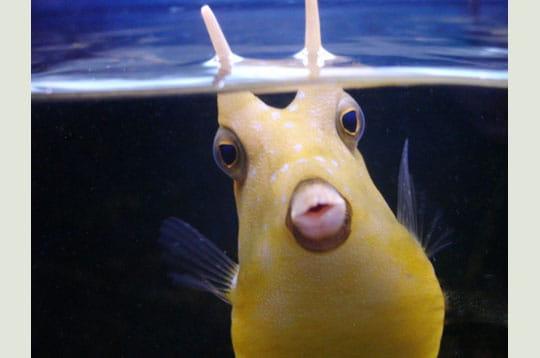 http://www.linternaute.com/humour/magazine/photo/poissons-en-folie-dans-la-galerie/image/sous-l-eau-270295.jpg