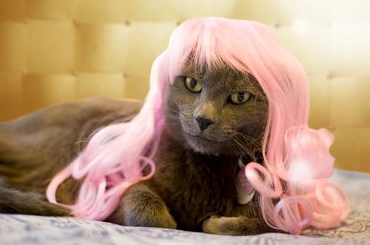 extravagant   les perruques pour chats