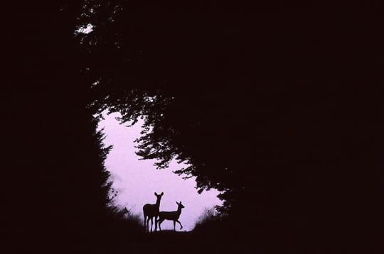 Clair obscur les plus belles images des photographes for Dans un miroir obscur