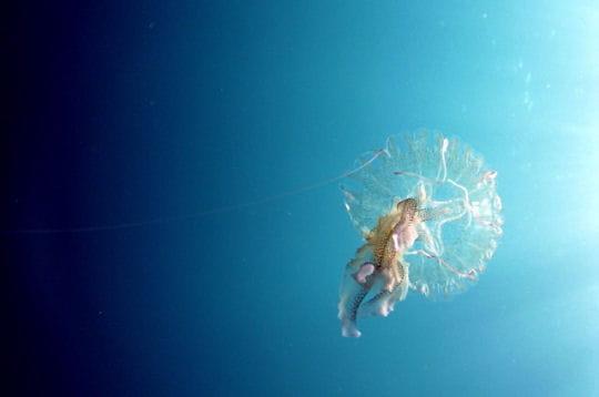 Le ballet de la méduse