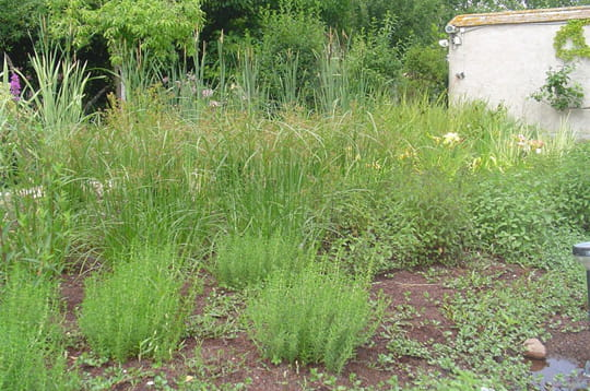 Les Plantes Cr Ation D 39 Une Piscine Biologique Linternaute