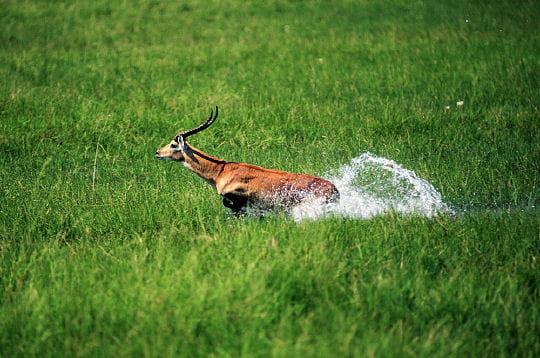http://www.linternaute.com/nature-animaux/animaux-sauvages/photo/okavango/image/delta-l-okavango-290949.jpg