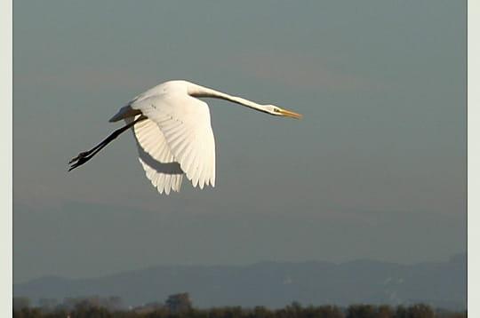Oiseau bouche volante oiseau bouche américaine