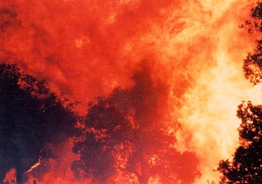 http://www.linternaute.com/nature-animaux/magazine/photo/beaute-farouche-de-la-nature-insoumise/image/feu-300432.jpg