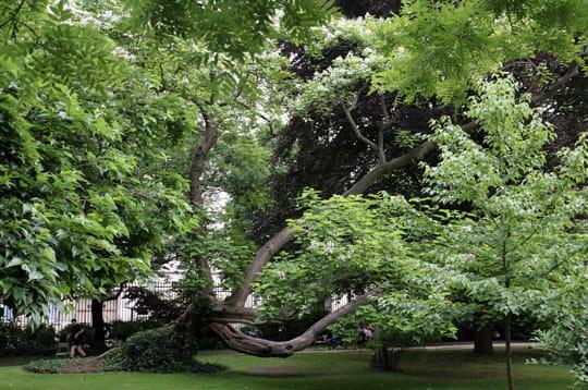 Le reve vendu conte japonais for Arbres jardin du luxembourg