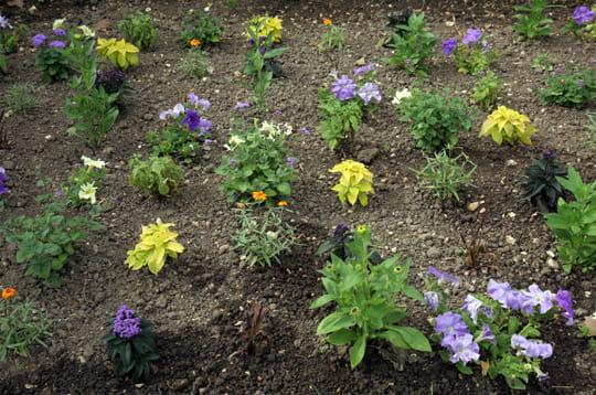 parterre de fleurs explorez le jardin du luxembourg linternaute. Black Bedroom Furniture Sets. Home Design Ideas
