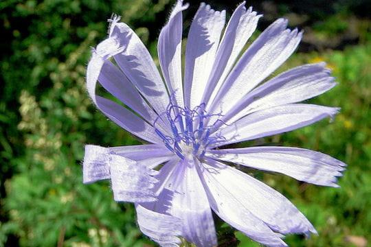 fleur-327840