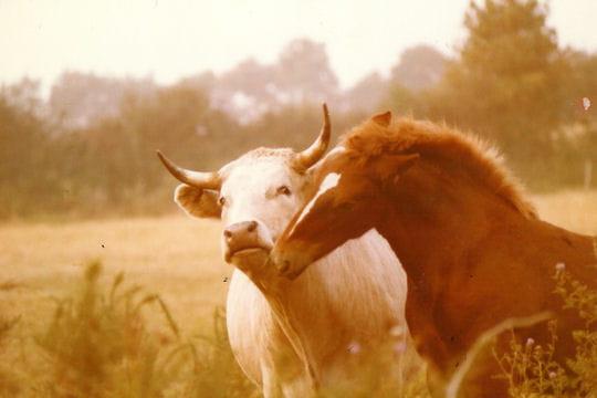 amitié rurale