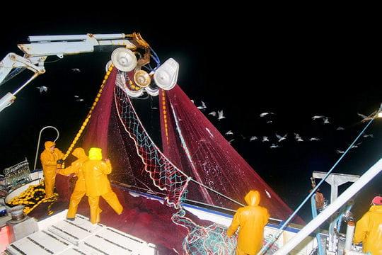 Sardines de Concarneau