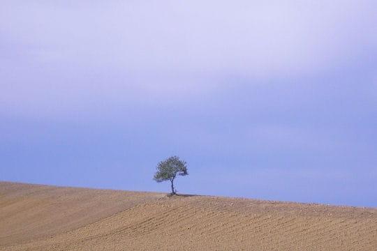 arbre 350357