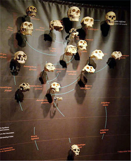 Mur de crânes