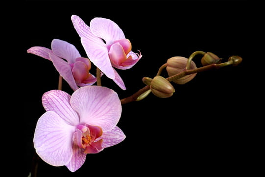 branche-d-orchidees-373250