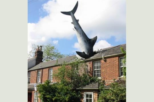 Une pluie de requins ?