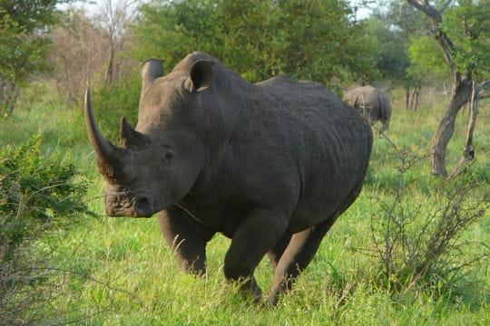 http://www.linternaute.com/voyage/magazine/photo/un-safari-ferroviaire-en-afrique/image/rhinoceros-lever-jour-397251.jpg