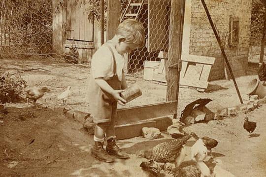 A quoi ressemblait la vie rurale autrefois linternaute - Que donner a manger aux poules ...