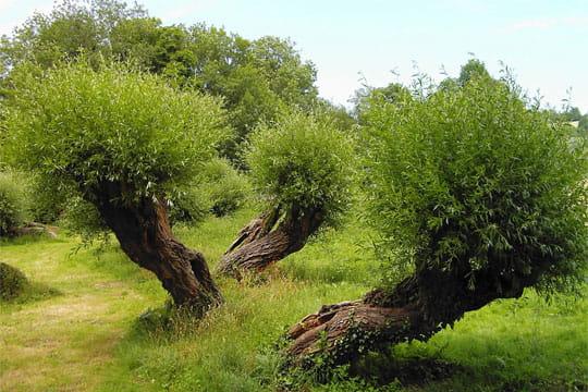 arbres-dansant-401877
