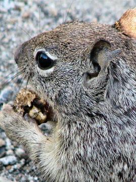 Les 100 plus belles photos animalières de l'année Ecureuils-americains-404817