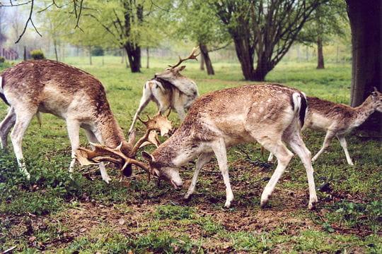 Les 100 plus belles photos animalières de l'année - Page 2 Daims-404821