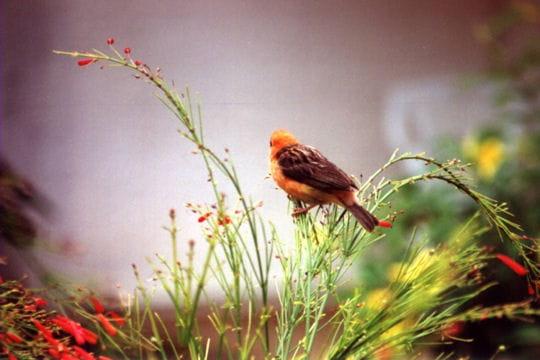Les 100 plus belles photos animalières de l'année Oiseau-observateur-405111