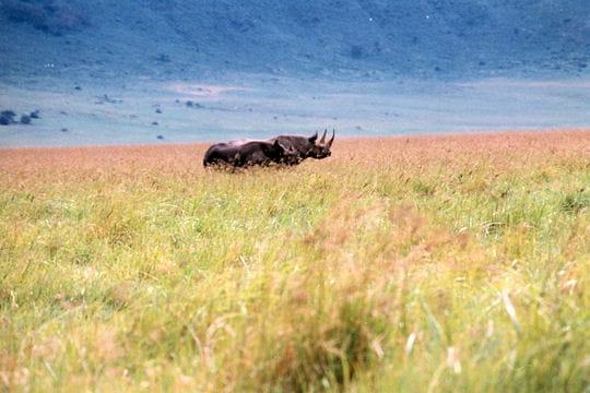 Les 100 plus belles photos animalières de l'année Rhinoceros-405113