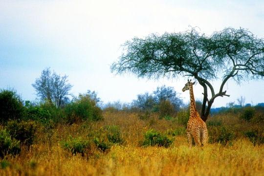 Les 100 plus belles photos animalières de l'année Girafe-405117