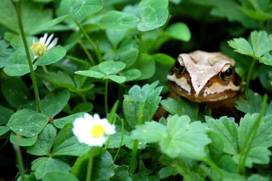 Les 100 plus belles photos animalières de l'année - Page 2 Batracien-405119