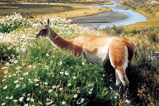 Les 100 plus belles photos animalières de l'année - Page 2 Guanaco-405145