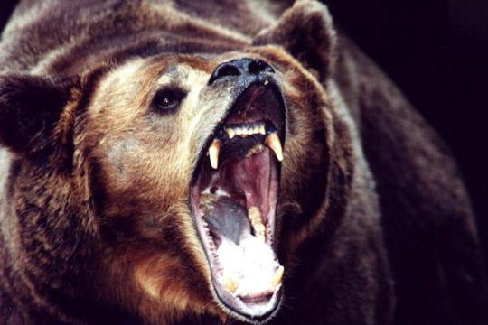 Les 100 plus belles photos animalières de l'année - Page 2 Grosse-colere-405148