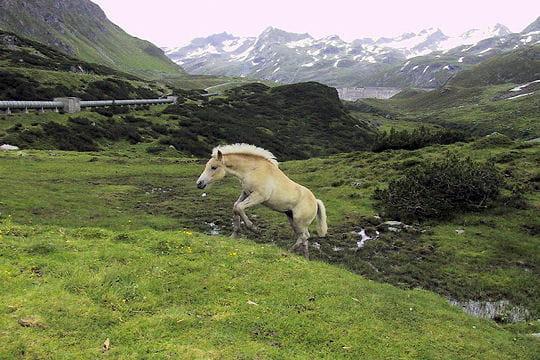 Les 100 plus belles photos animalières de l'année - Page 2 Cheval-405160