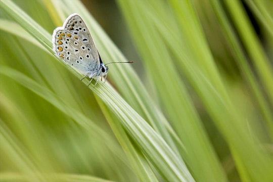 Les 100 plus belles photos animalières de l'année - Page 2 Papillon-405209