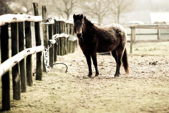 Les 100 plus belles photos animalières de l'année - Page 2 Cheval-trait-405232