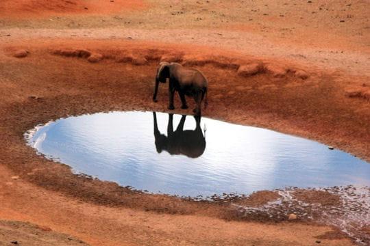 Les 100 plus belles photos animalières de l'année - Page 2 Elephant-miroir-405234