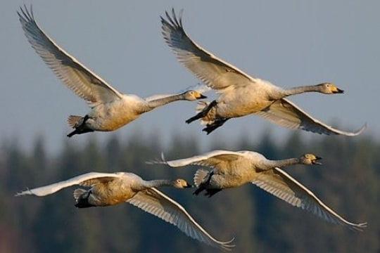 Les 100 plus belles photos animalières de l'année - Page 2 Migration-406216