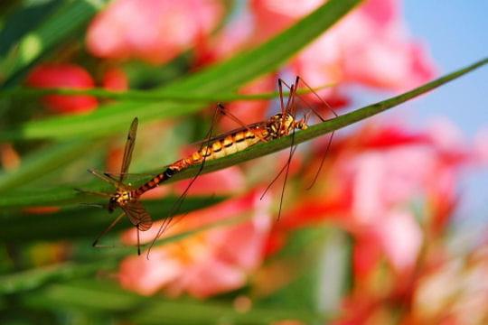 Les 100 plus belles photos animalières de l'année - Page 2 Insectes-406226