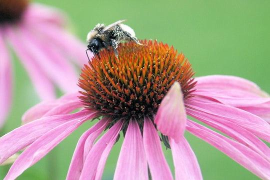 Les 100 plus belles photos animalières de l'année - Page 2 Neige-pollen-406230