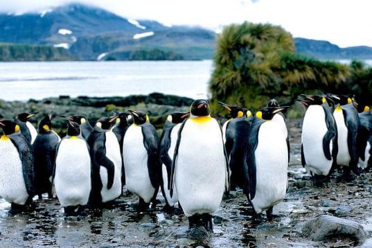 Les 100 plus belles photos animalières de l'année - Page 2 Colonie-406236