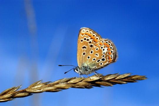 Les 100 plus belles photos animalières de l'année - Page 2 Papillon-406244